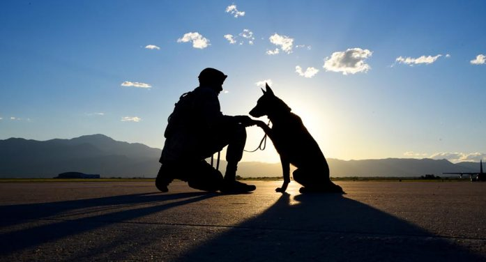 A dog and his handler: a working relationship