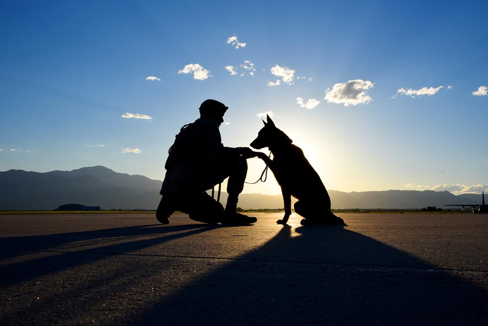 (U.S. Air Force photo by Airman 1st Class Dennis Hoffman) PETERSON AIR FORCE BASE, Colo. — Senior Airman Tariq Russell, 21st Security Forces Squadron military working dog handler, shakes hands with his partner, Ppaul, at Peterson Air Force Base, Colo., June 14, 2016. Military working dog handlers are assigned one dog for their entire duration at Peterson AFB.