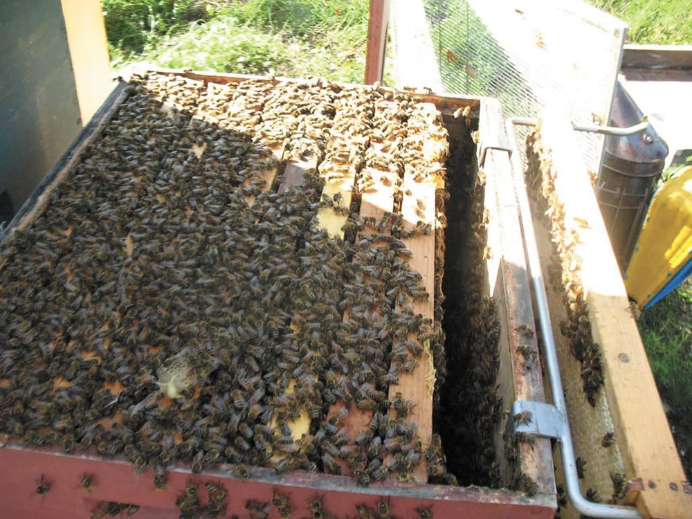 CLEAR AIR FORCE STATION, Alaska – Tech. Sgt. James Campbell, Alaska Air National Guard 213th Security Forces Squadron, has a bee hive with more than 60,000 bees in the fields of Clear Air Force Station. He began keeping bees a few years ago to keep busy and provide relaxation following work at the remote installation.